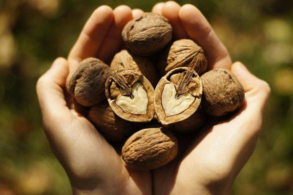 خواص مصرف گردو چیست و چه عوارضی دارد؟