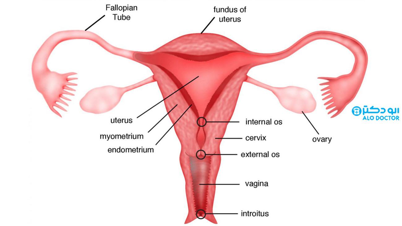 ترشحات واژن به چه معناست؟