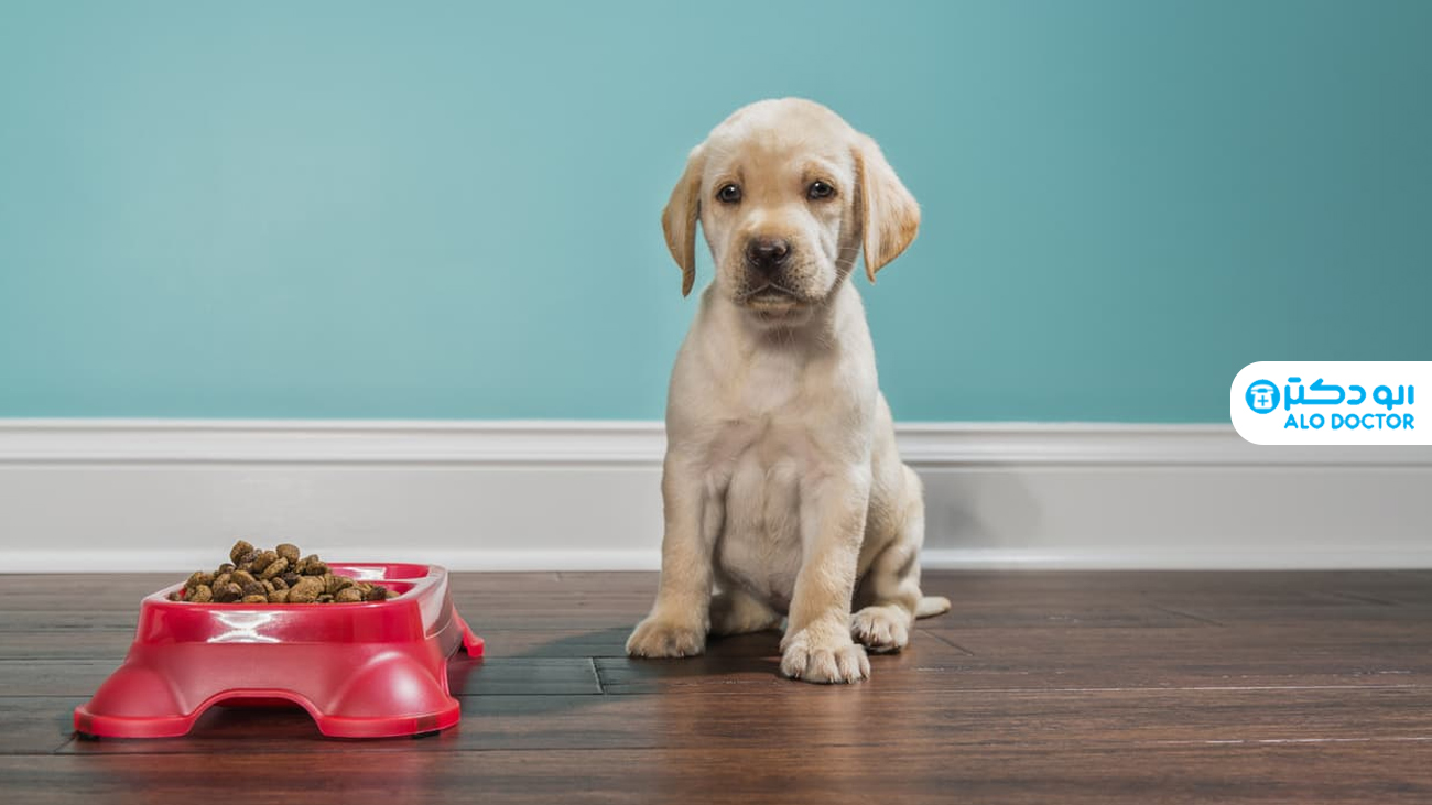 علت غذا نخوردن سگ چه می تواند باشد؟
